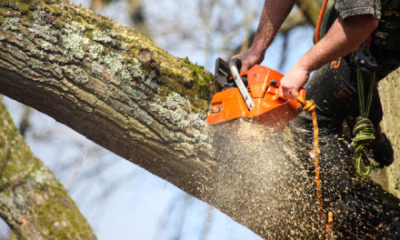 Make You're Garden Looks Great By Taking Services Of Tree Surgeon